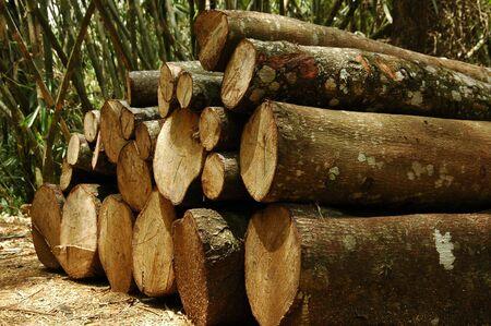 logging: Logging Stock Stock Photo