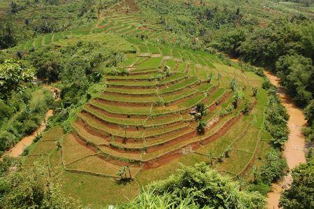 waterbesparing: Terasering rijst veld, een bodem-en waterconservering techniek