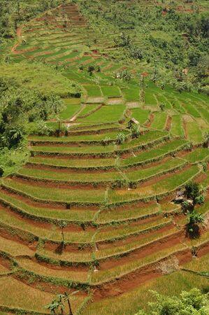 Terasering Rice Field (Sawah Bertingkat) in Indonesia Stock Photo - 2771650