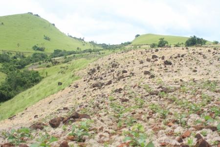 greening: Greening the Hill
