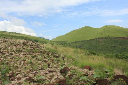 greening: greening the abandon land