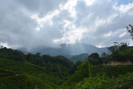 cropland: Green tea plantations and road in Munnar, Kerala