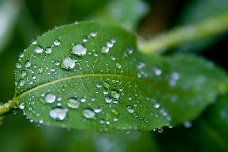 close up view of water drops on a green leaf photo