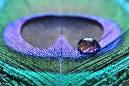 孔雀の羽にドロップ水のクローズ アップ 写真素材