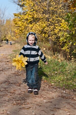 young boy with yellow maple leaves walking in the park photo