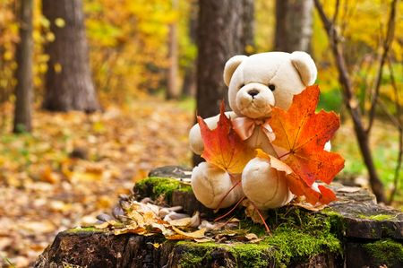 teddy bear with red maple leaves in autumn park photo