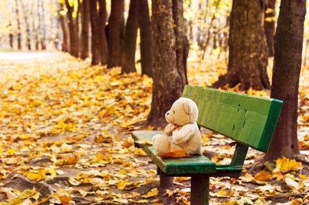 teddy bear sitting on the bench in autumn park photo