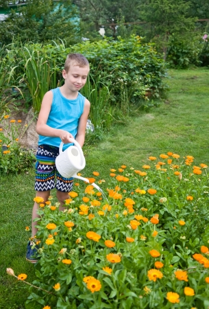 watering pot: boy pouring orange flowers with watering pot