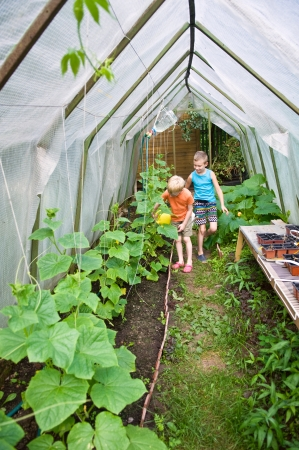 two boys pouring cucumbers with watering pots in hothouse photo