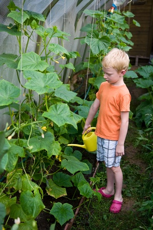 young boy pouring cucumbers in hothouse photo
