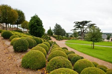 ツゲの行、アンボワーズ庭、ロワール渓谷、フランス レバノン杉。 写真素材