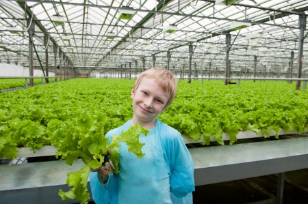 Smiling boy holding lettuce in greenhouse photo