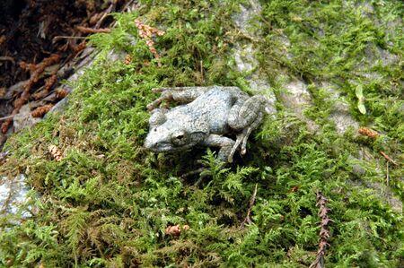 White frog photo