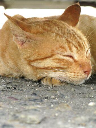 whiskar: Sleeping cat