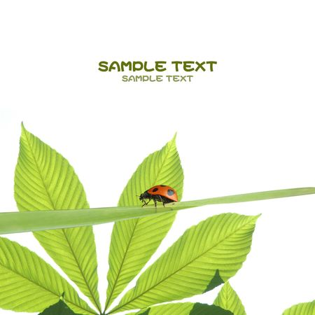 young green leaves against white background and plenty of space for text Stock Photo - 5728922