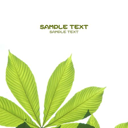 young green leaves against white background and plenty of space for text  Stock Photo