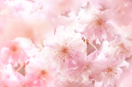 Back ground of cherry blossoms - Please look at my portfolio other kinds exist Stock Photo - 6239767