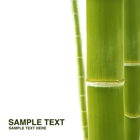 Bamboo isolated on white - Please look at my portfolio other kinds exist Stock Photo