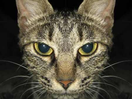 to exist: Portrait of a cat with yellow eyes - Please look at my portfolio other kinds exist