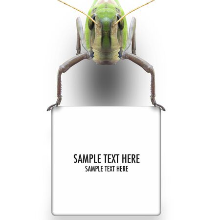 Grasshopper's graphic background - Please look at my portfolio other kinds exist