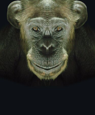 to exist: Chimpanzees face - Please look at my portfolio other kinds exist