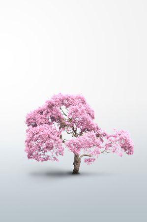 通信: ピンクの木色 - してください見て私のポートフォリオで他の種類が存在します。 写真素材