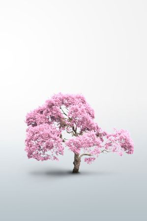 Tree of pink color - Please look at my portfolio other kinds exist Stock Photo - 6321691