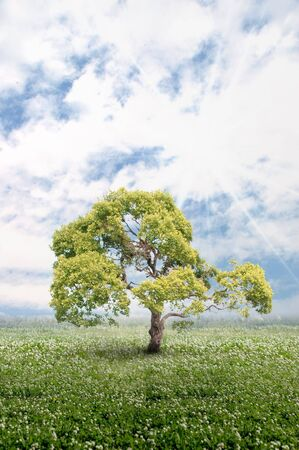 Isolated tree - Please look at my portfolio other kinds exist Stock Photo - 6321792