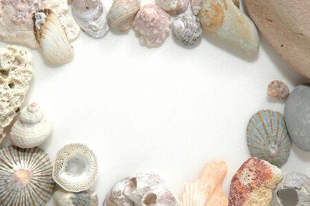combines: lovely seashells against white background