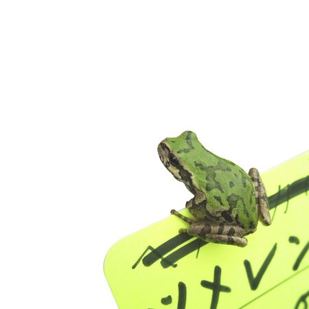 enriched: One green frog of white background Stock Photo