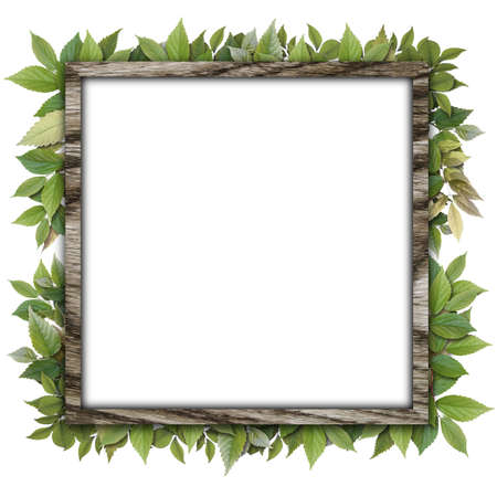 CG background of leaf and frame Stock Photo - 8279544
