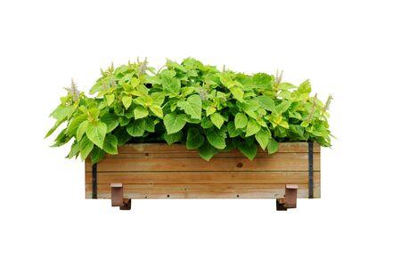 planters: Planters plant