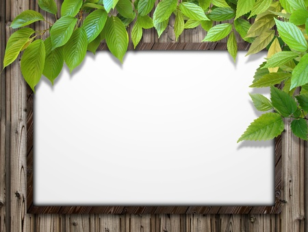 CG background of leaf and frame Stock Photo - 8597116