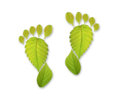 Leaf of shape of foot photo