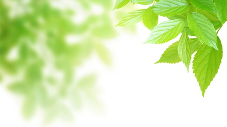 Synthetic background image of foliage leaf Stock Photo