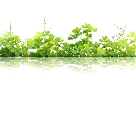 Material of grass Stock Photo - 8865443