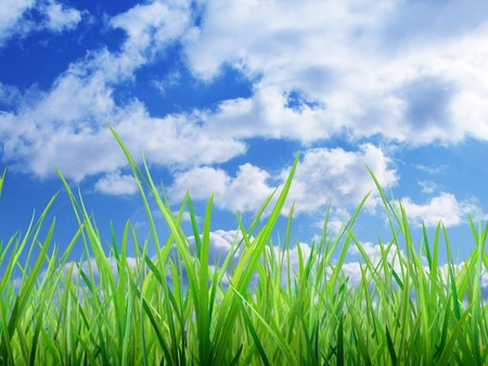Material of grass photo