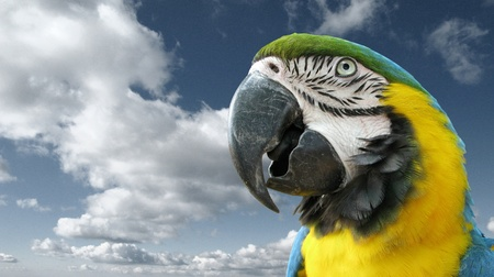 colorfulness: Parrot