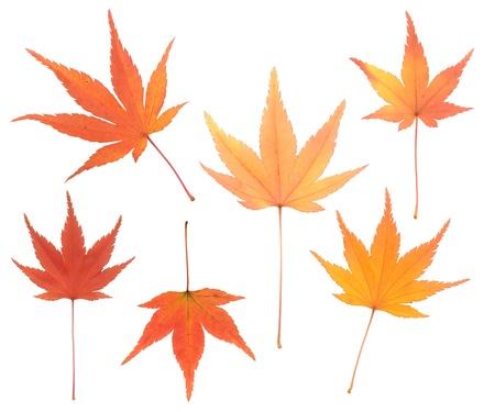 autumnal leaves Archivio Fotografico