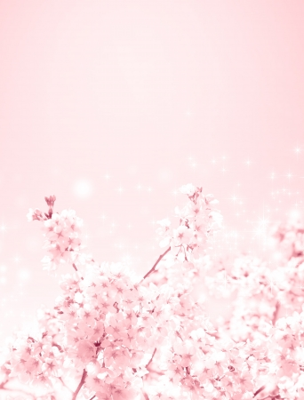 cherry blossoms Stock Photo - 19155097