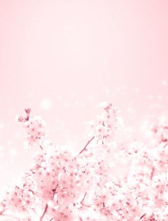 cherry blossoms Stock Photo - 19155097