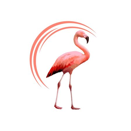 Pink flamingos. Cute flamingo animal exotic nature wild fauna zoo bird beak plumage legs tropical african beach art, cartoon vector