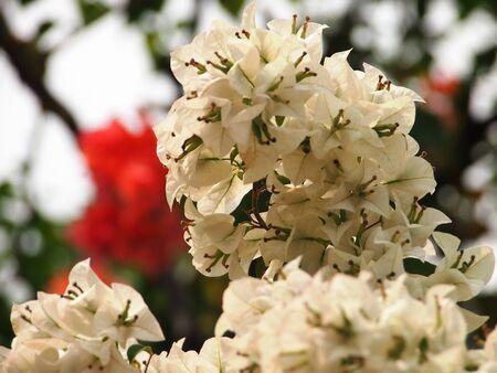 White Blossoms Stock Photo - 15656854