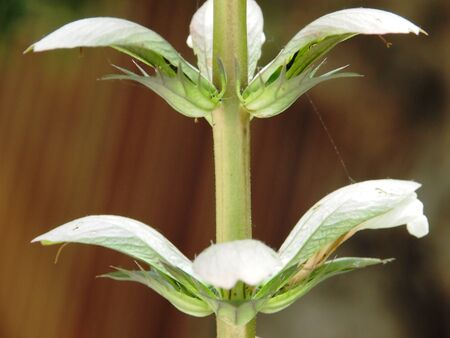 Natural Symmetry