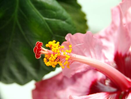 Pretty Pistil Stock Photo