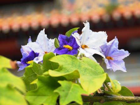 claras y oscuras flores de color violeta Foto de archivo
