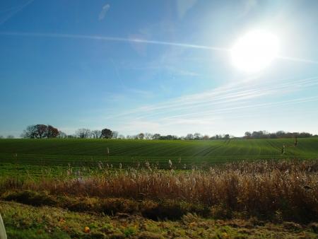 Grassland under the shinning sun