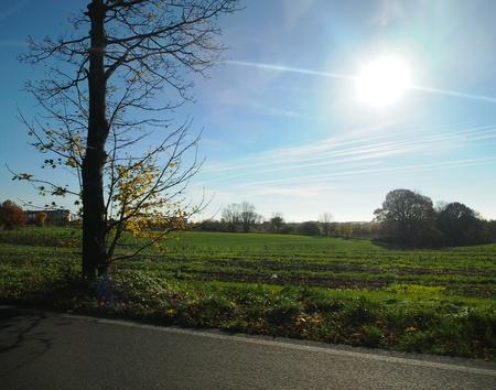 shinning: Grassland under the shinning sun and Autumn tree Stock Photo