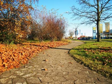 quite: Autumn quite footpath