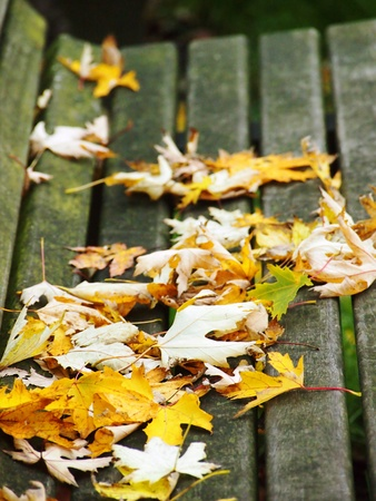 golden fallen leaves on the bench Stock Photo